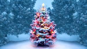History of Christmas Trees - HISTORY